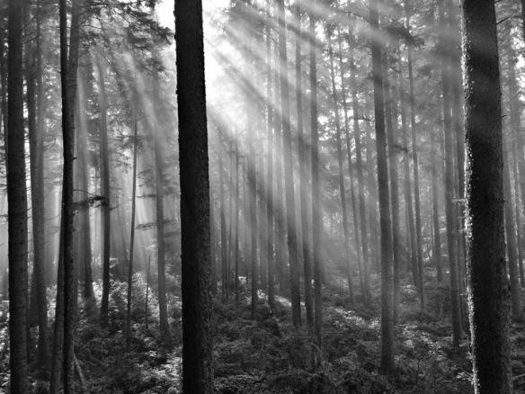 bosque-luz