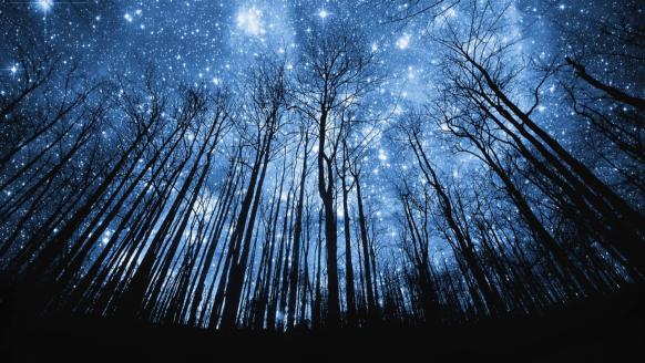 arboles-y-estrellas